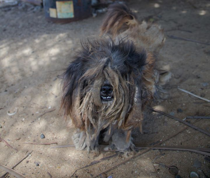 Asmall stray dog on Dead Dog Beach in 2009.