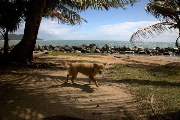 An abandoned dog on Dead Dog Beach in 2009.