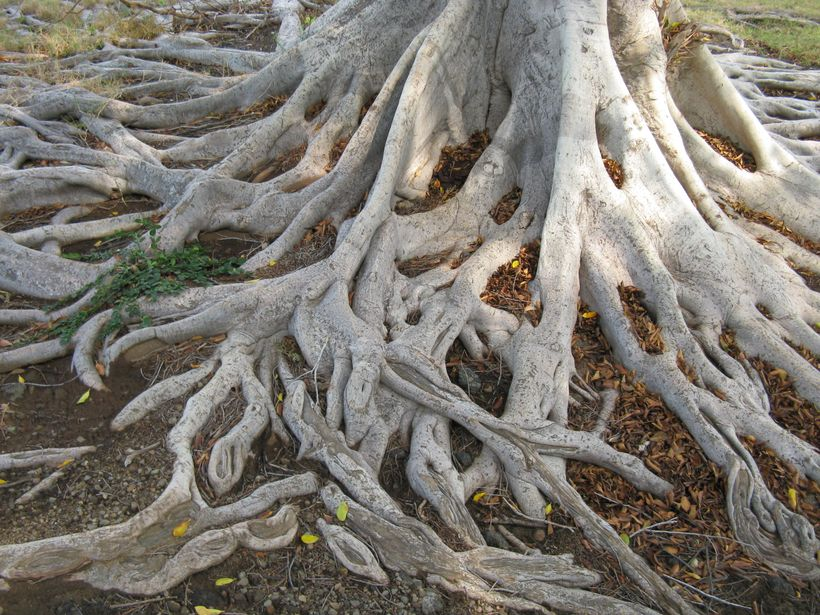 <strong>ROOTS</strong>