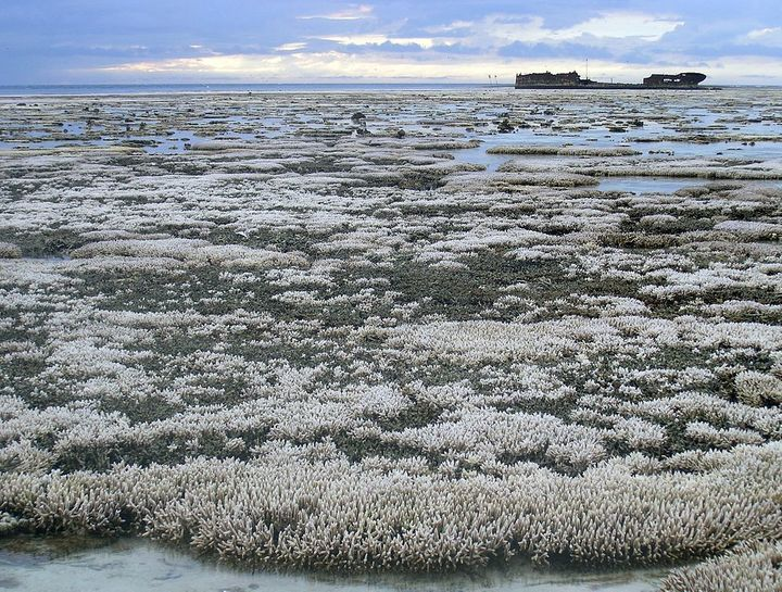 Bleached coral on the Great Barrier Reef.