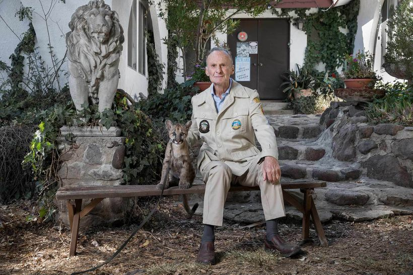 <em>Hubert Wells, photographed with Johnny- a visiting mountain lion cub at his Thousand Oaks, Ca home, next to one of his on