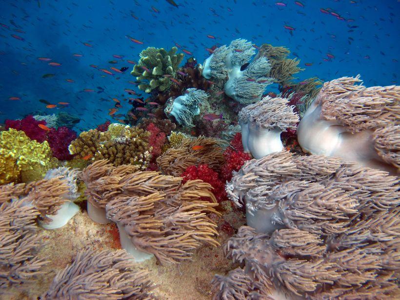 Soft coral in Fiji's Namena Marine Reserve