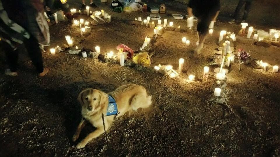 Fluffy Canine Heroes Show Up To Comfort A Grieving Las Vegas images 1