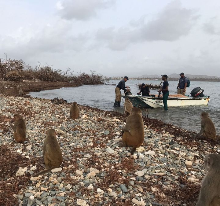Researchers take a boat to Cayo Santiago to assess the damage from Hurricane Maria.