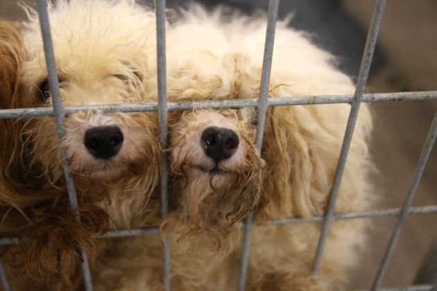 More Than 100 Dogs Rescued From Cramped Filthy Cages In