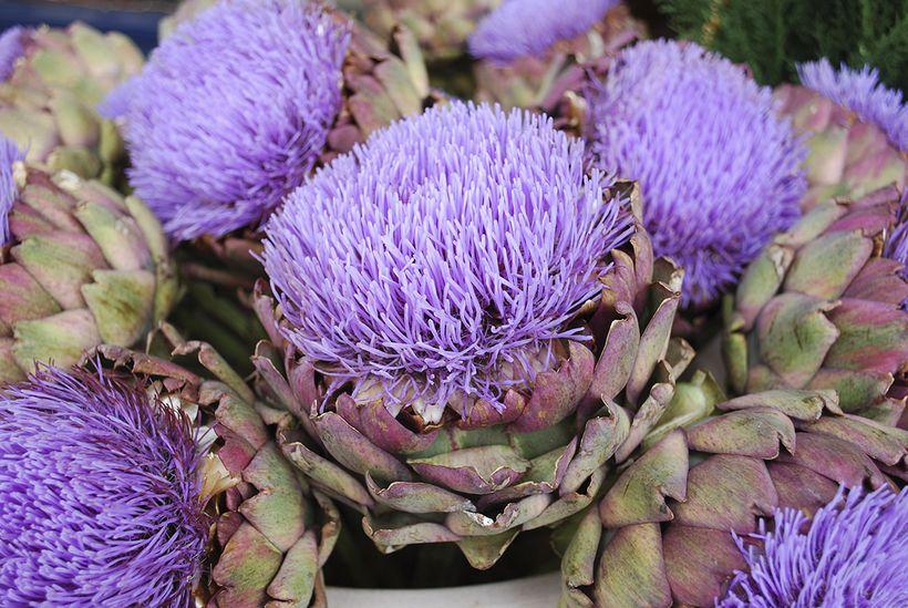 Seasonal flower guide fall huffpost when allowed to bloom artichokes mature into striking spiky purple blue or pink mightylinksfo