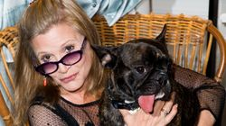 Carrie Fisher's Dog Gets Into Character For The New 'Star Wars'