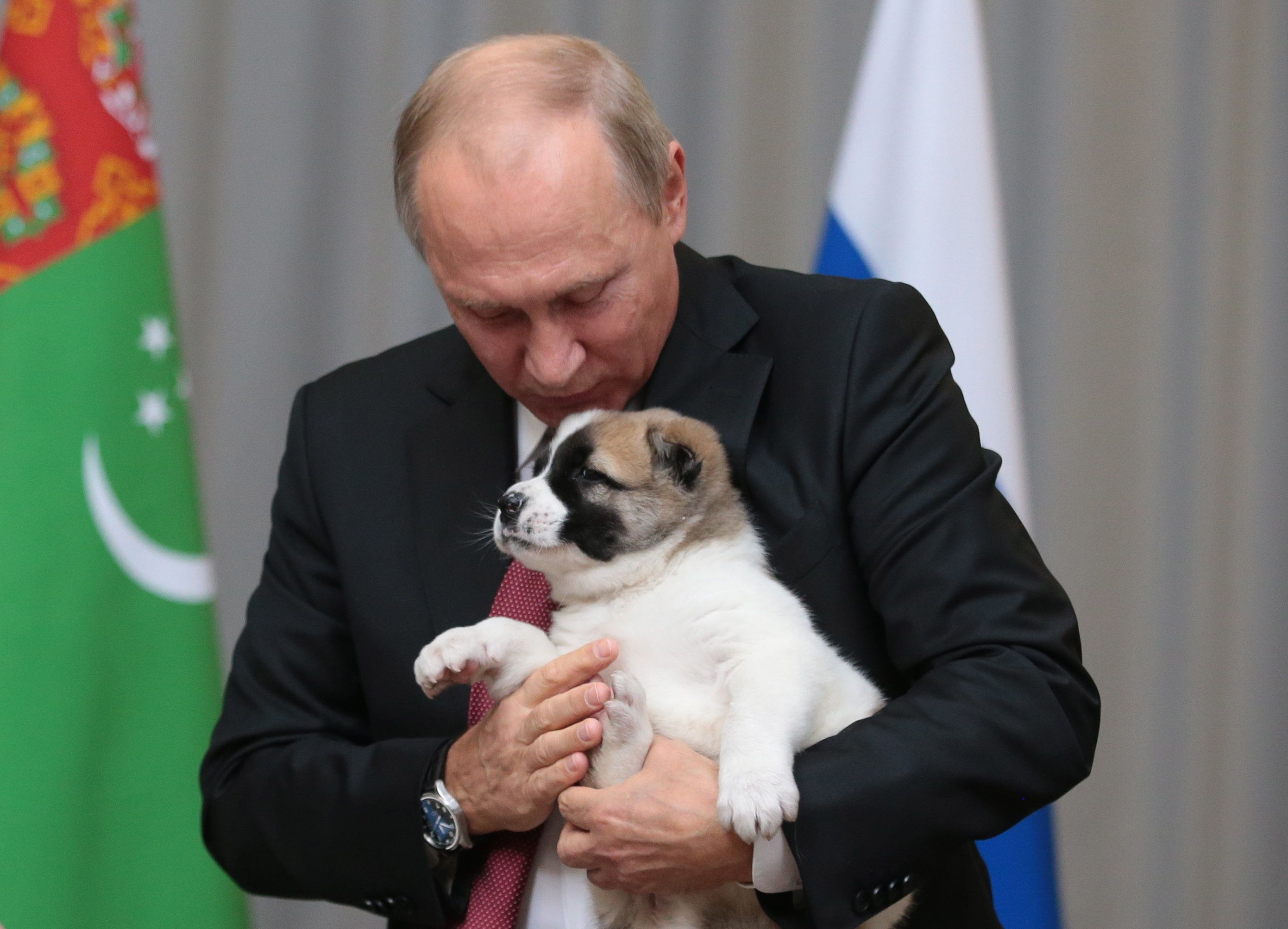 SOCHI, RUSSIA - OCTOBER 11, 2017: Russia's President Vladimir Putin holds the puppy given to him by Turkmenistan's President Gurbanguly Berdimuhamedow for his birthday, during a meeting at a conference centre of the Radisson Blu Resort hotel. Mikhail Metzel/TASS (Photo by Mikhail Metzel\TASS via Getty Images)
