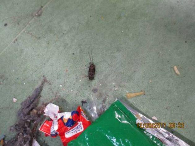 A cockroach amongst litter at HMP