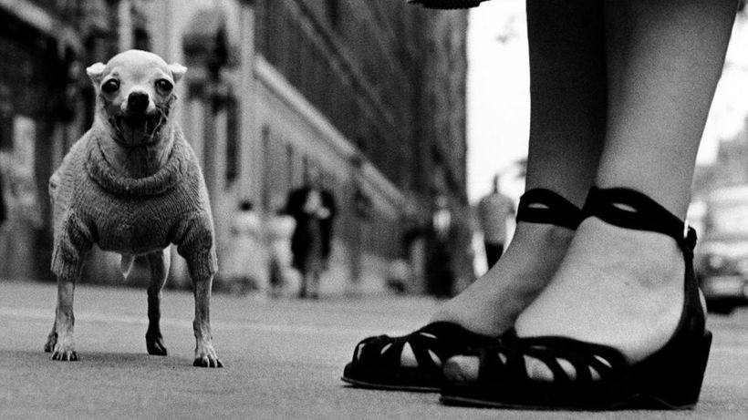 New York City, 1946. Elliott Erwitt (born 1928). Gelatin silver print.