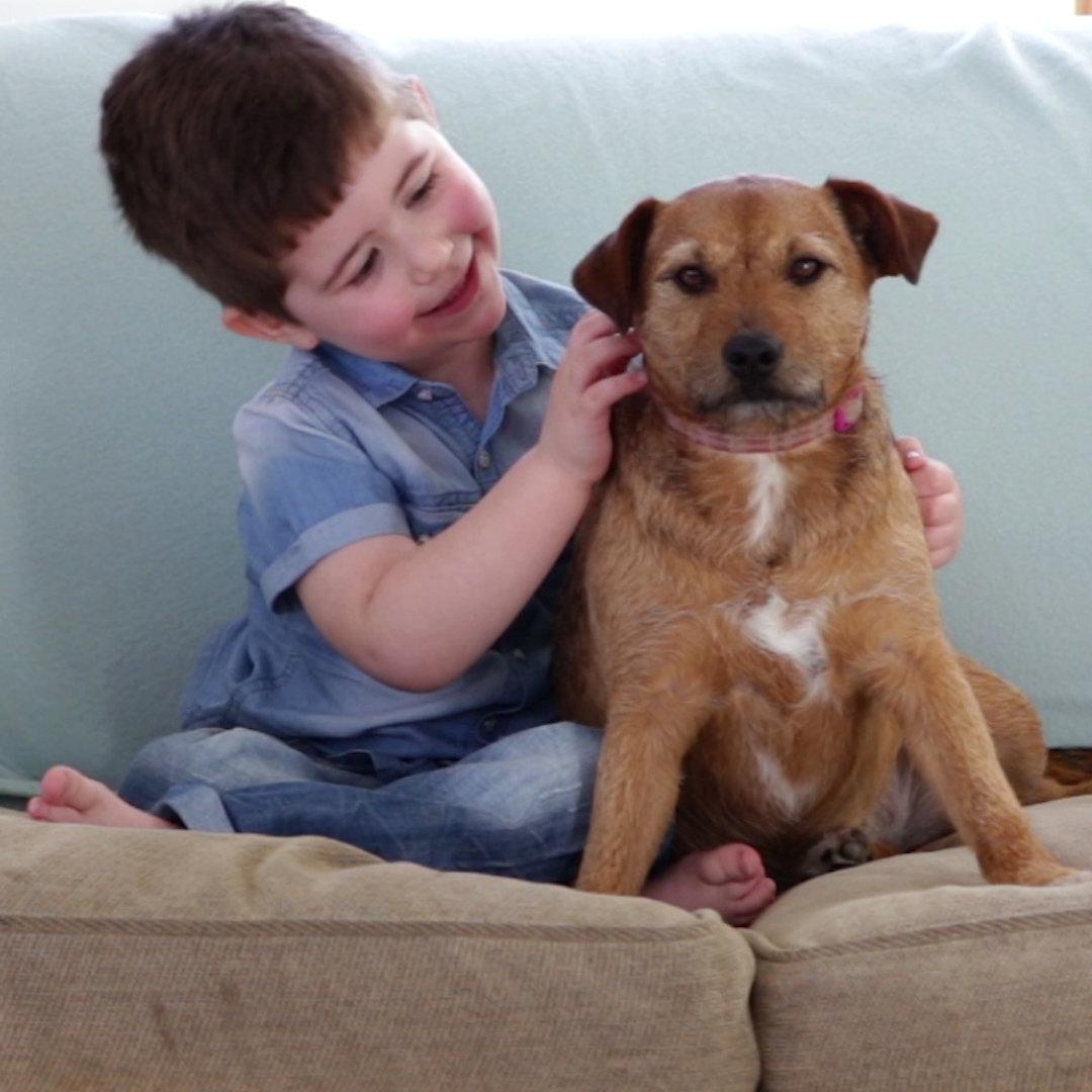 Revealed: The UK's Top 10 Dog