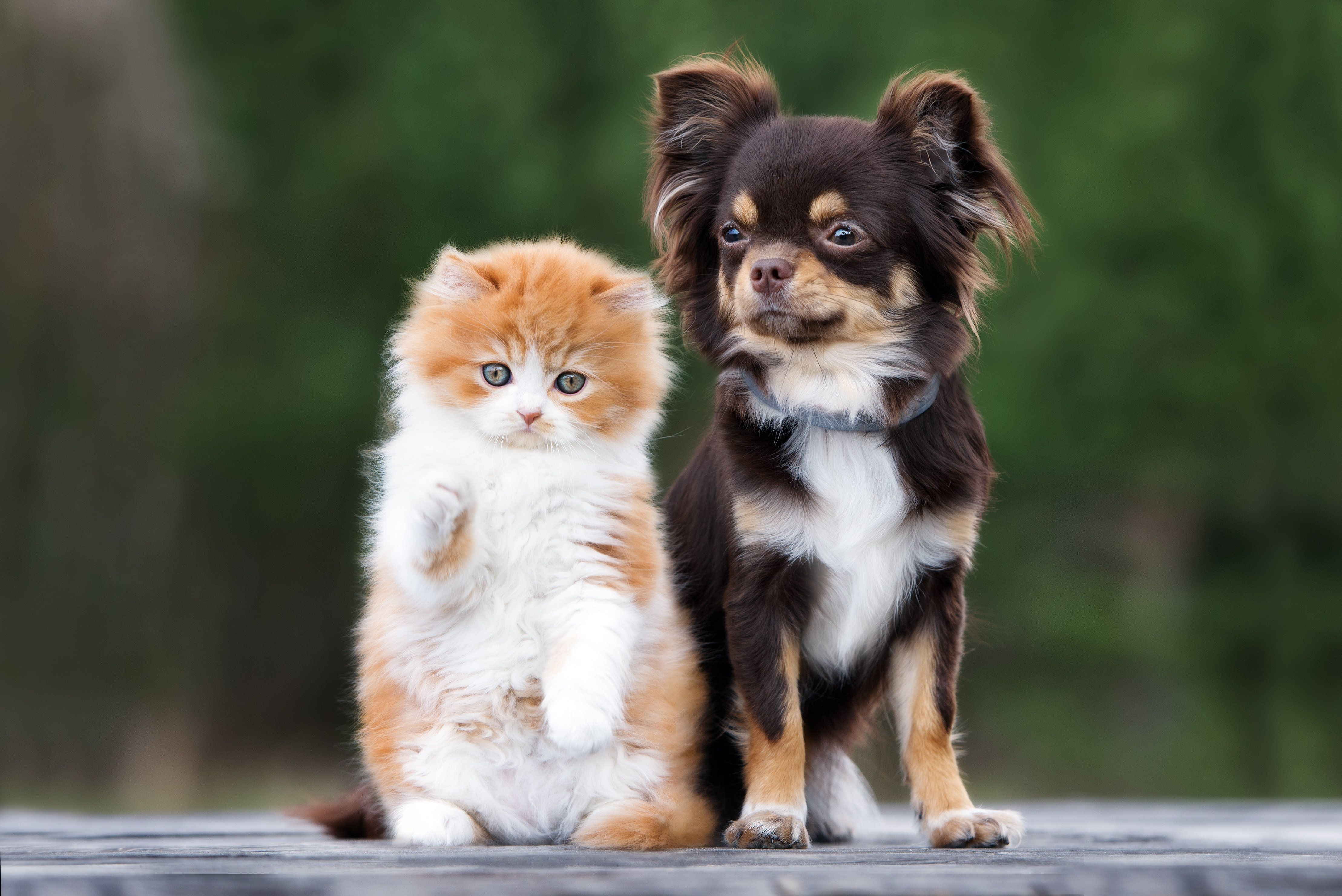California Bans Pet Shop Sales Of Non-Rescue Cats, Dogs And