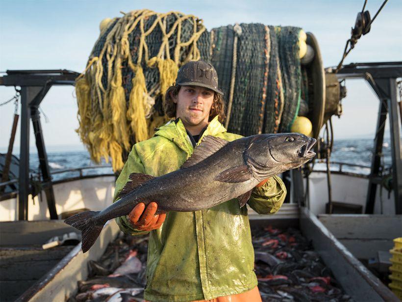 A deckhand holding a sablefish, aka black cod