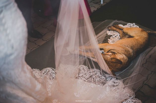 The pup took a nap on the bride's veil as the couple exchanged