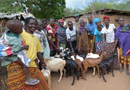 <em>Members of Koroirok women in Turkana group show off their goats donated by UNDP as part of an initiative to restock lives