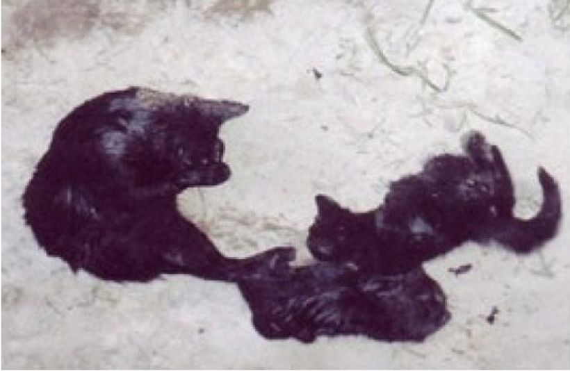 Healthy mother cat and two kittens killed by PETA within minutes, despite promising to find them a home.