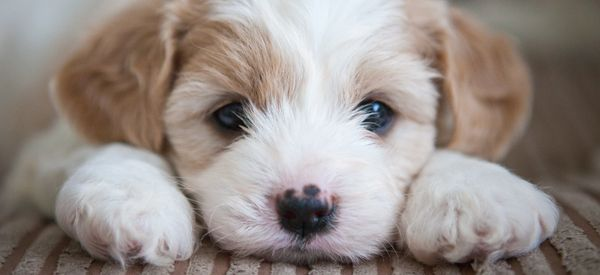 The Moment Two Sisters Get A Surprise Puppy Will Make You Cry Happy Tears