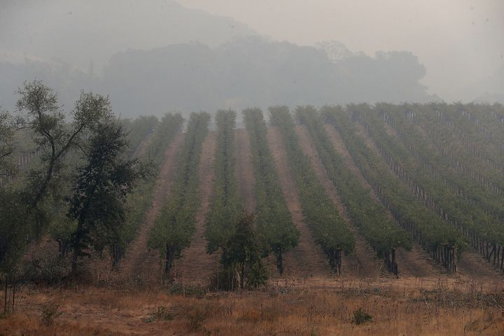 Heavy smoke hangs over a vineyard as the Nuns Fire continues to burn on Oct. 10, 2017, in Glen Ellen, California.