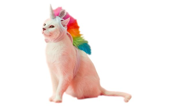 """<a href=""""https://www.target.com/p/unicorn-cat-full-body-costume-one-size/-/A-52447295&"""" target=""""_blank"""">Get it here</a>.&"""