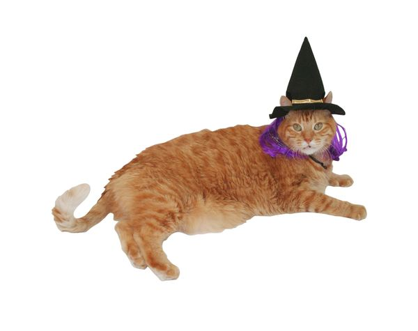 """<a href=""""https://www.target.com/p/witch-hat-with-wings-cat-costume-headwear-boots-barkley-153/-/A-52447293"""" target=""""_blank"""">G"""