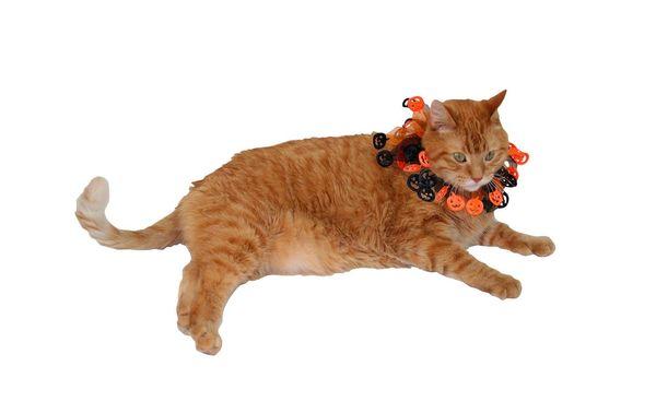 "<a href=""https://www.target.com/p/pumpkin-ruff-cat-costume-accessories/-/A-52447316"" target=""_blank"">Get it here</a>."