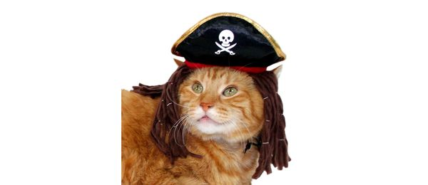 "<a href=""https://www.target.com/p/black-pirate-hat-cat-costume-headwear/-/A-52447296"" target=""_blank"">Get it here</a>."