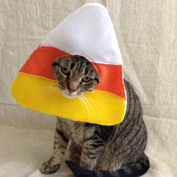 """<a href=""""https://www.etsy.com/listing/548497940/candy-corn-cat-costume"""" target=""""_blank"""">Get it here</a>."""
