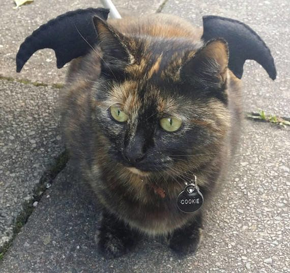 """<a href=""""https://www.etsy.com/listing/549301764/bat-wings-cat-costume"""" target=""""_blank"""">Get ithere</a>."""