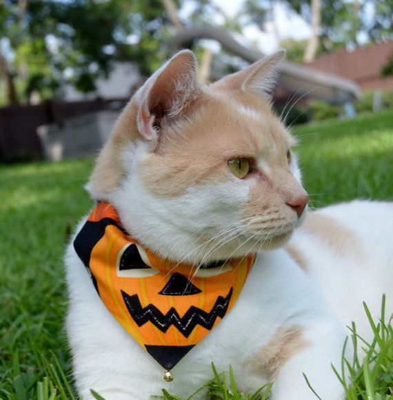 "<a href=""https://www.etsy.com/listing/474500965/halloween-cat-bandana-set-of-2"" target=""_blank"">Get it here</a>."