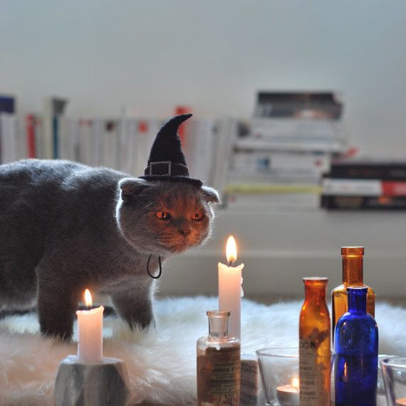 "<a href=""https://www.etsy.com/listing/253985968/cat-costume-witch-hat-hissy-witch-cat"" target=""_blank"">Get it here</a>."