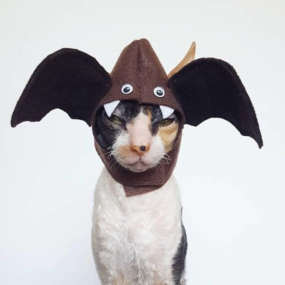 """<a href=""""https://www.etsy.com/listing/554842965/boo-bat-cat-dog-and-small-pet-hat"""" target=""""_blank"""">Get it here</a>."""