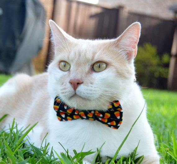 "<a href=""https://www.etsy.com/listing/455324910/halloween-cat-collar-halloween-cat-bow"" target=""_blank"">Get it here</a>.&nbsp"