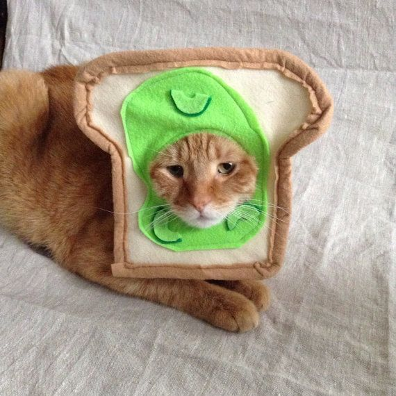 "<a href=""https://www.etsy.com/listing/490192064/avocado-toast-costume-for-cats"" target=""_blank"">Get it here</a>."
