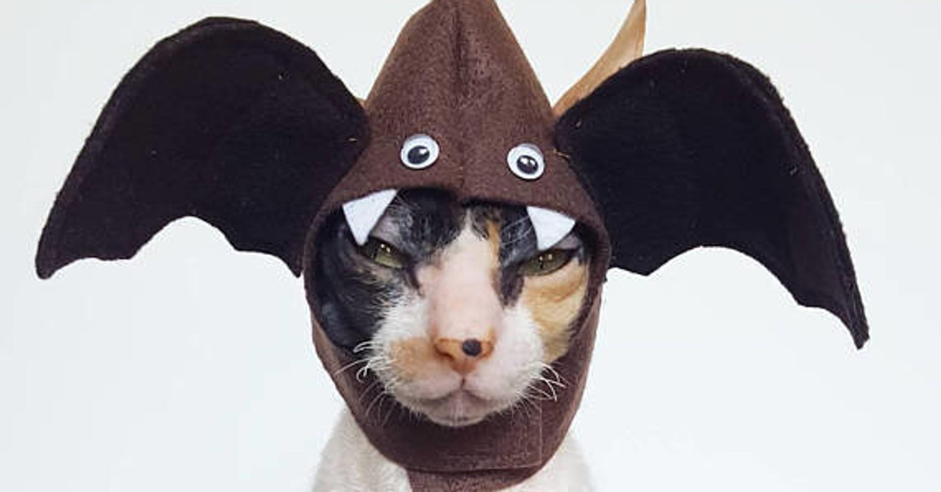 Halloween Costumes For Pets | HuffPost