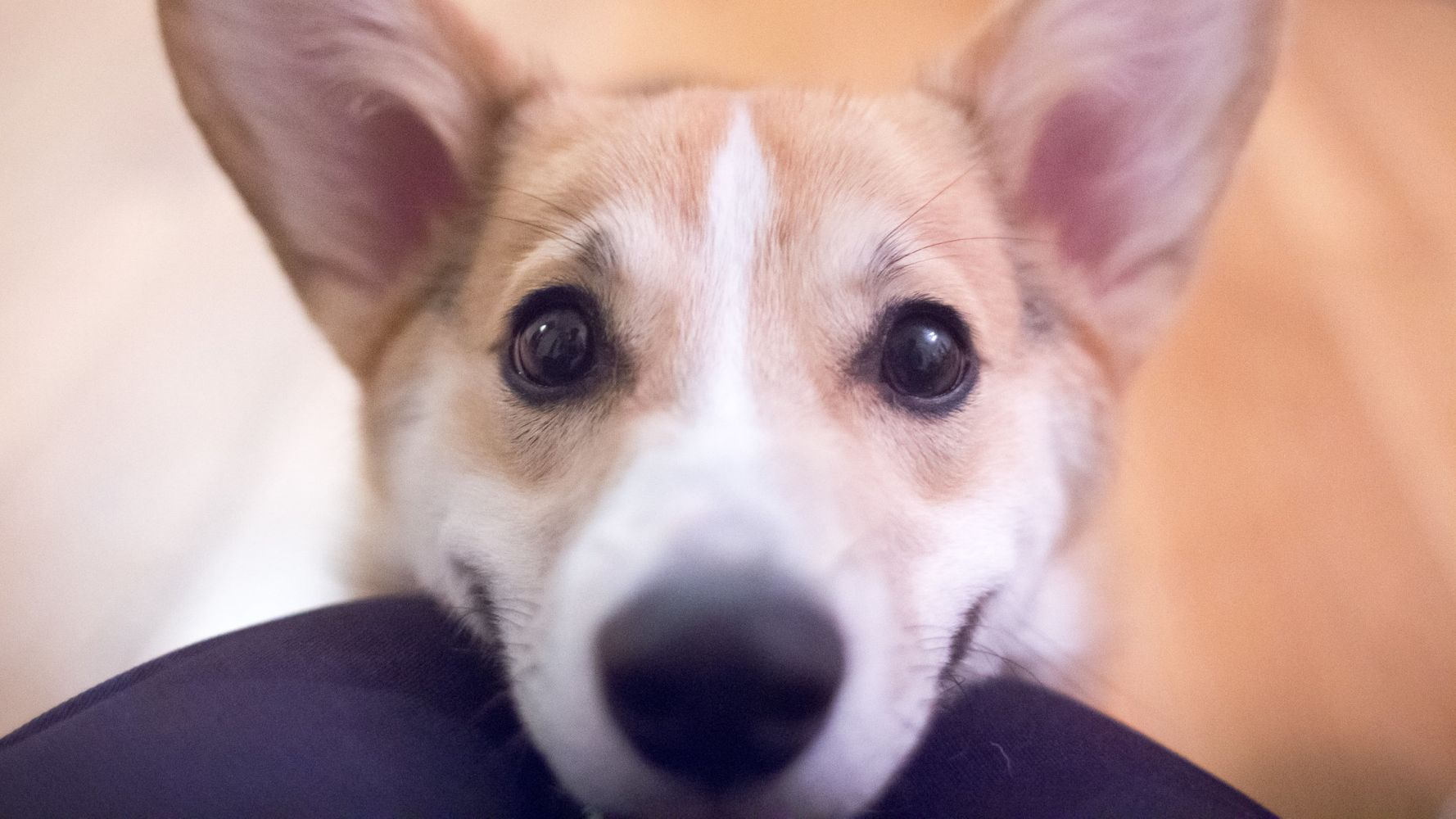 Your Dog Making A 'Sad Puppy Face' May Be Trying To Tell You