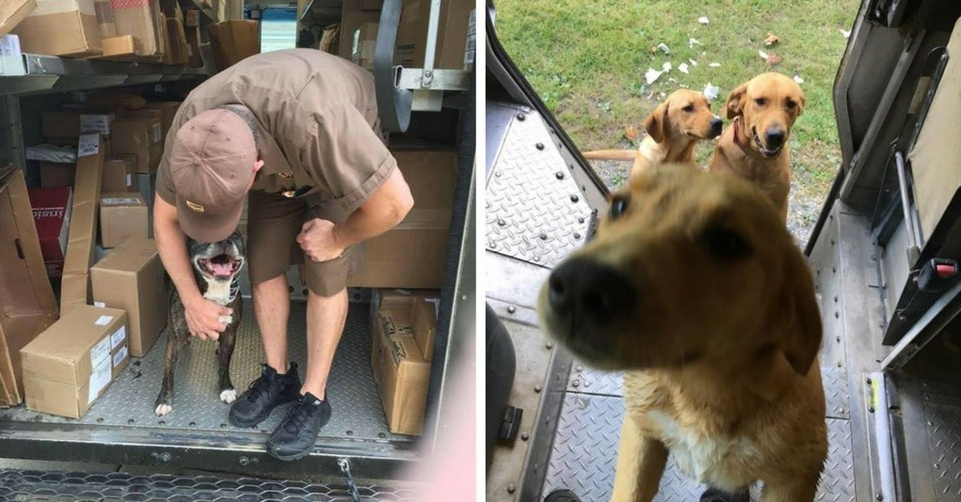 Guys, There's A Facebook Page Dedicated To Dogs UPS Drivers Meet