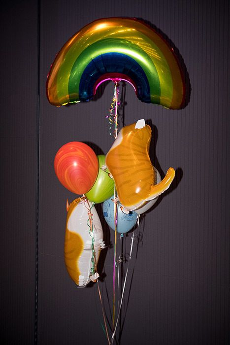 The CryptoKitties team gained inspiration during the weekend from this set of balloons featuring kittens and a rainbow. Crypt