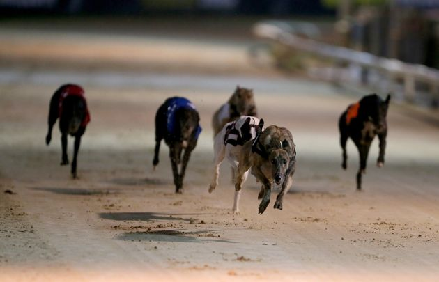 Ian Lavery owns greyhounds but did not declare an interest in Parliament, it is