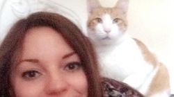 Woman Tracks Down Missing Cat After Uploading Its Photo To