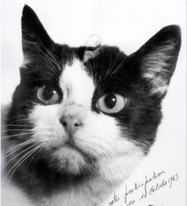 The First Cat In Space May Finally Get The Recognition She