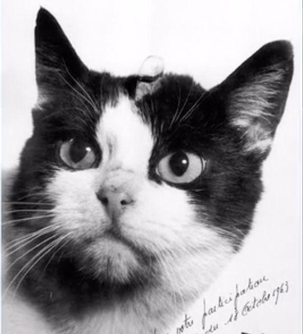 A primeira gatínea que foi para o espaço pode finalmente ter o reconhecimento que
