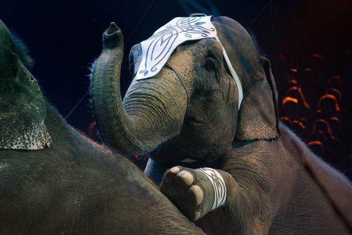 A new law in New York state will ban circuses and parades from using elephants as of 2019.