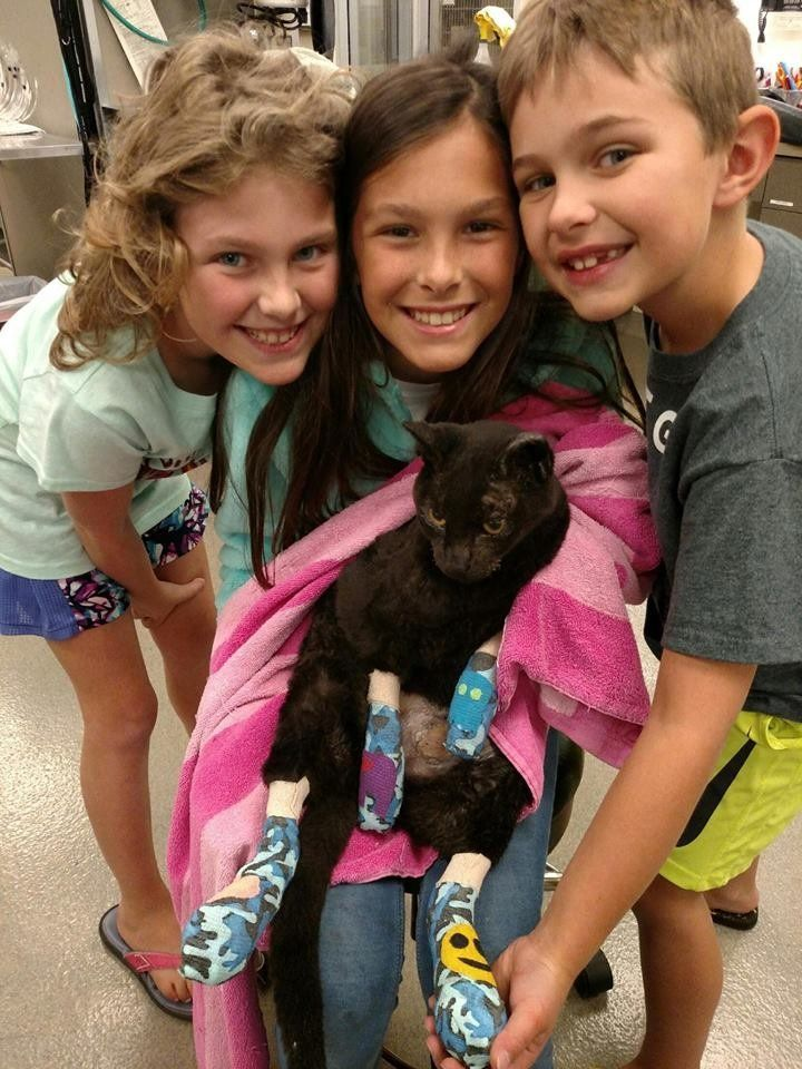 Luke, a 13-year-old cat, in the arms of the children who thought he had been lost forever in a wildfire earlier this month.