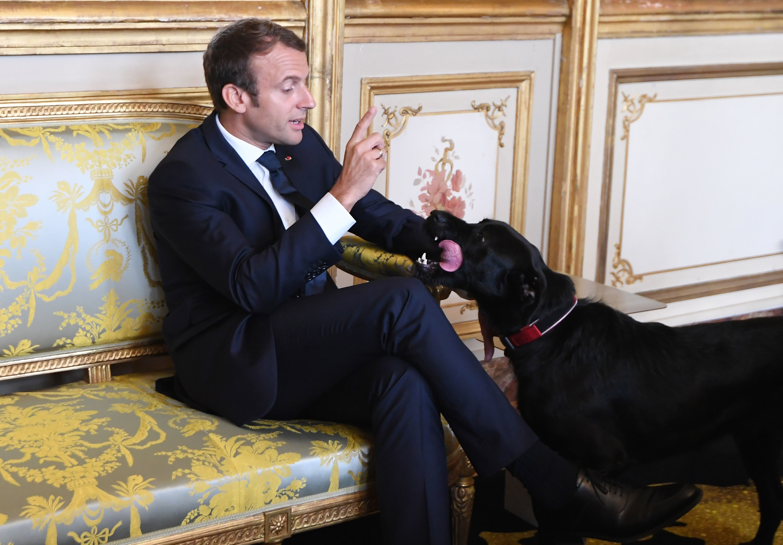 Emmanuel Macron's Dog Takes The P*ss,