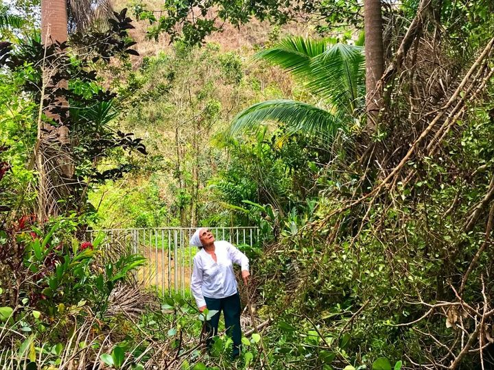 Mercedes Mercado finds hurricane damage high and low on her farm in Hatillo, Puerto Rico.