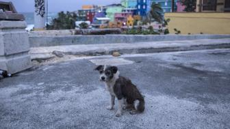 SAN JUAN, PUERTO RICO - SEPTEMBER 19:  A dog roams the streets of the La Perla neighborhood in Old San Juan as residents prepare for a direct hit from Hurricane Maria on September 19, 2017 in San Juan, Puerto Rico. Puerto Rico Gov. Ricardo Rossello is saying Maria could be the 'most catastrophic hurricane to hit' the U.S. territory in a century. (Photo by Alex Wroblewski/Getty Images)
