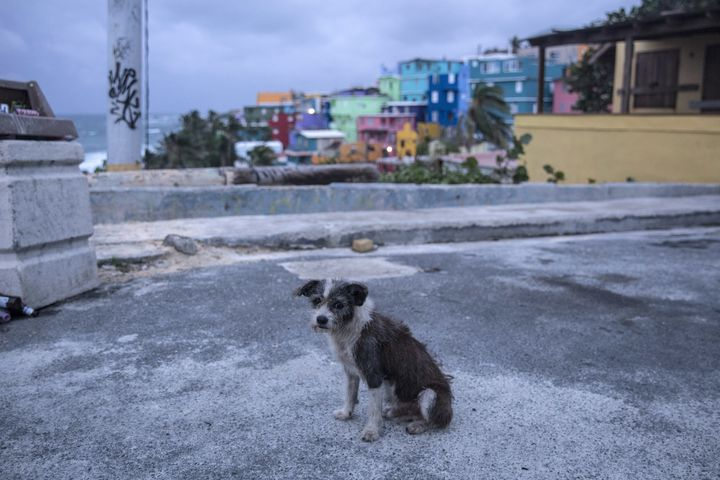 A dog roaming the streets of Old San Juan not long before Hurricane Maria hit the island.