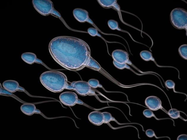 """It is entirely possible for sperm counts to be declining ... without their being a corresponding..."