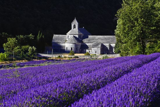 "Lavender fields — L'Abbaye de Senanque, Provence, France <a rel=""nofollow"" href=""https://www.zoonar.com/"" target=""_blank"">www"