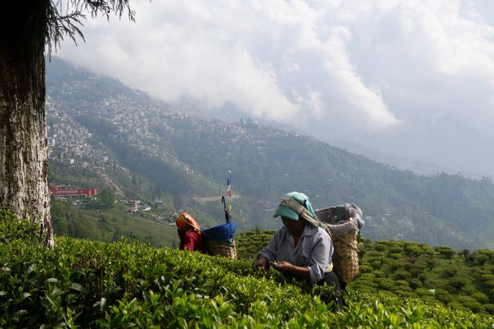 <p><em>Tea pickers in Darjeeling, India.</em></p>